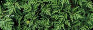 "Podkładka pod nadgarstek i klawiaturę LogiLink, 280x90mm, nadruk ""Forest"""